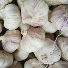 Fresh New Crop Red Garlic From Shandong