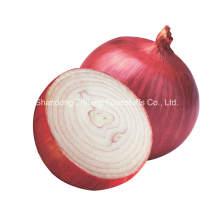 Новый свежий урожай лук-шалот для экспорта