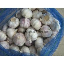 Frische Ernte Chinesisch Normal Weiß Knoblauch