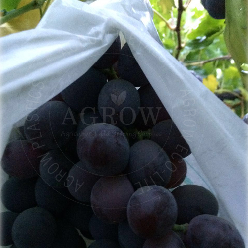 Agriculture Fruit Grape Bag