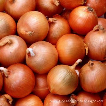 Exportieren Sie frische frische gelbe Zwiebel