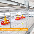 Pakistan Automatic Poultry Farm Chicken Pan Feeder for Broiler