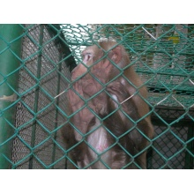 High Quality New Design Chain Link Large Monkey Fence
