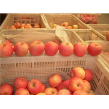 buy apples wholesale