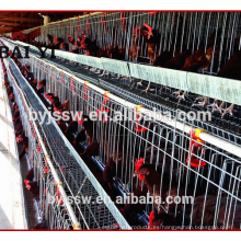 Pollo de corral Equipo de granja para capa Criador Capa de pollo