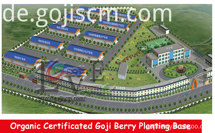 Organic Nutrient Goji Berry supplier