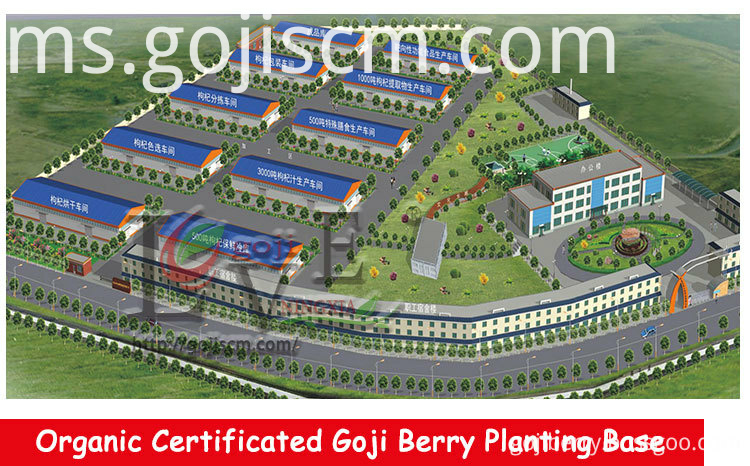 Non GMO Goji Berries planting base