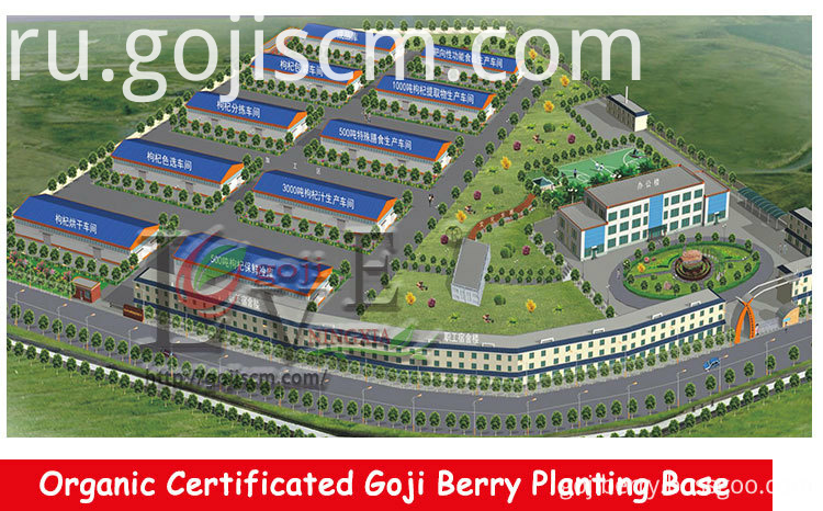 Factory Organic Goji Berry supplier