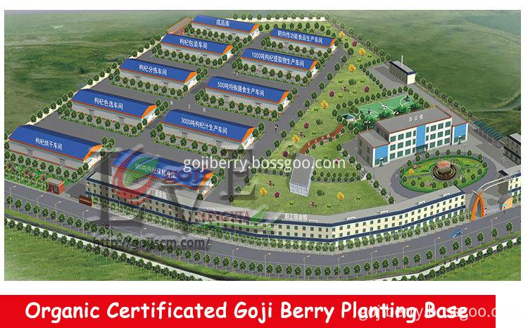 2017 NEW GOJI BERRY manufacturer