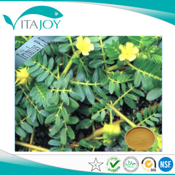 Tribulus Terrestris Extract For Men Enhancement