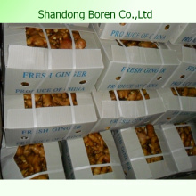 50g-300g Fresh Ginger From China