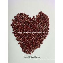 Chinesische Bohnen Kleine rote Bohne
