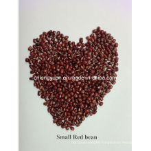 Chinese Beans Small Red Bean