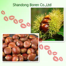 The Best Quality Chinese Chestnut