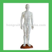 Puntos de cuerpo de la acupuntura humana china 50cm Modelo de la acupuntura