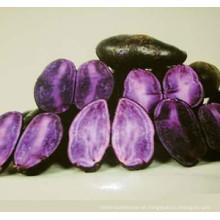 IQF frozen purple sweet potato purple potato