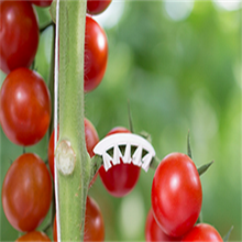 Plastic Tomato Hook For Supporting Vegetables