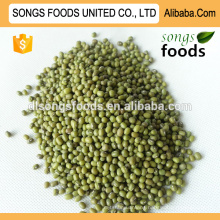 Mung Beans with High Quality