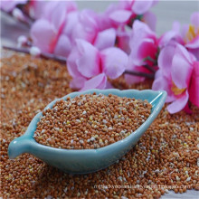 high quality red millet in husk(foxtail millet)