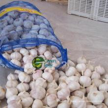 Preço de alho por atacado na China