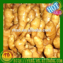 Clean, no rot and pest ginger root for sale