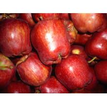 Свежий красный экспорт Apple One и Two Grade