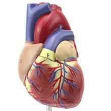 TopRanking 12479 Modelo anatômico do coração, tamanho da vida 2 peças anatomia modelo médico coração