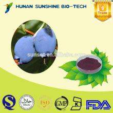 2016 best sell factory offer bilberry fruit extract free sample