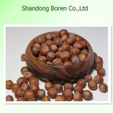 Angebot Hot Sale Kastanie aus China