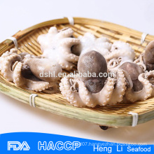 China best quality baby octopus