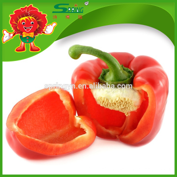 Vegetable fresh capsicum with competitive export price