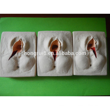 ISO 3 шт. В 1Set-Vulva Suturing Practice Model, Episiorrhaphy Trainer