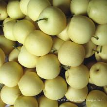 Frische neue Ernte Goldene Birne / Krone Birne gute Qualität
