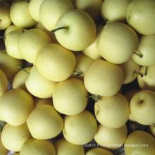 Fresh New Crop Golden Pear / Crown Pear Bonne qualité