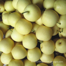 Fresh New Crop Golden Pear/Crown Pear Good Quality