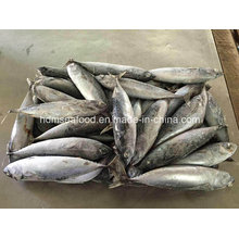 200-300g Frozen Fresh Bonito