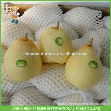 Niedriger Preis Fresh Ya Pear