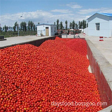 Export Tomato Paste to Global with Cheap Price