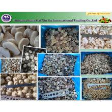 замороженные грибы (белый гриб /белый гриб /шиитаке /гриб намеко)