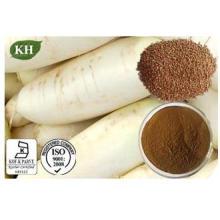 GMP ISO approuvé 100% Extrait de graines de radis naturel