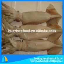 various high quality frozen fresh whole round squid supplier