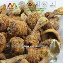 ISO&GMP Polysaccharides Agaricus Blazei Murill Powder