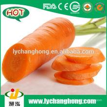 Fresh Carrot For Doha Maket