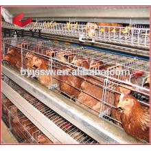 Distributeur de l'Afrique du Sud Cage de couche d'équipement agricole