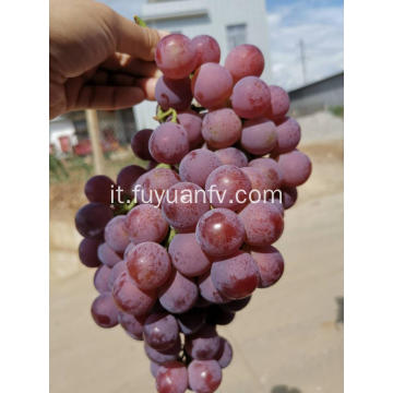 Hot Sell Fresh Sweet Red Grapes