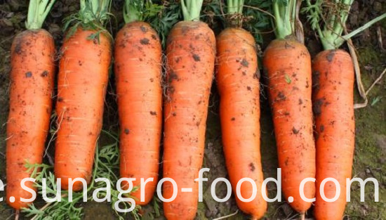 The Best Carrot Is Atender Carrot