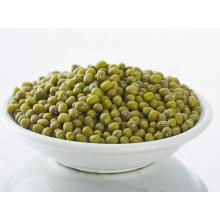 supply new green mung bean