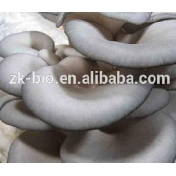 Fuente de fábrica Organic Oyster Mushroom Polysaccharide