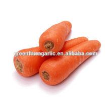 Exportation de carottes fraîches au Moyen-Orient