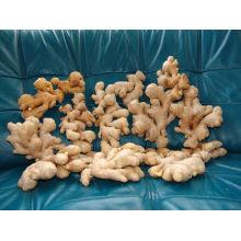 50-200g frischer Ingwer
